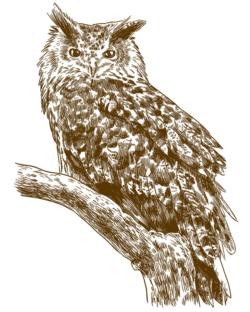 Engraving Owl clipart