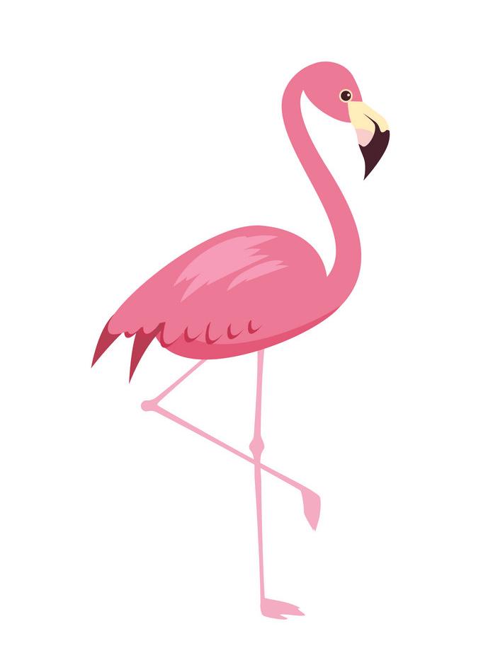 Flamingo clipart 1