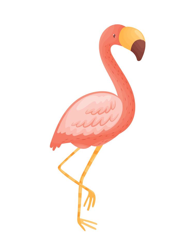 Flamingo clipart 2