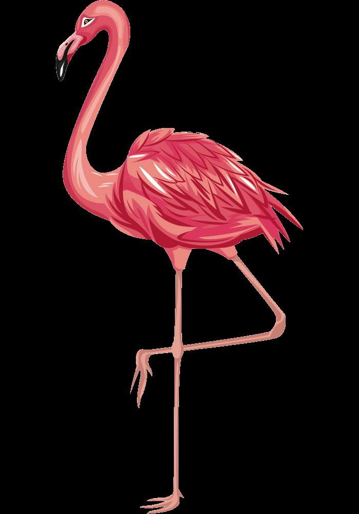Flamingo clipart transparent 1