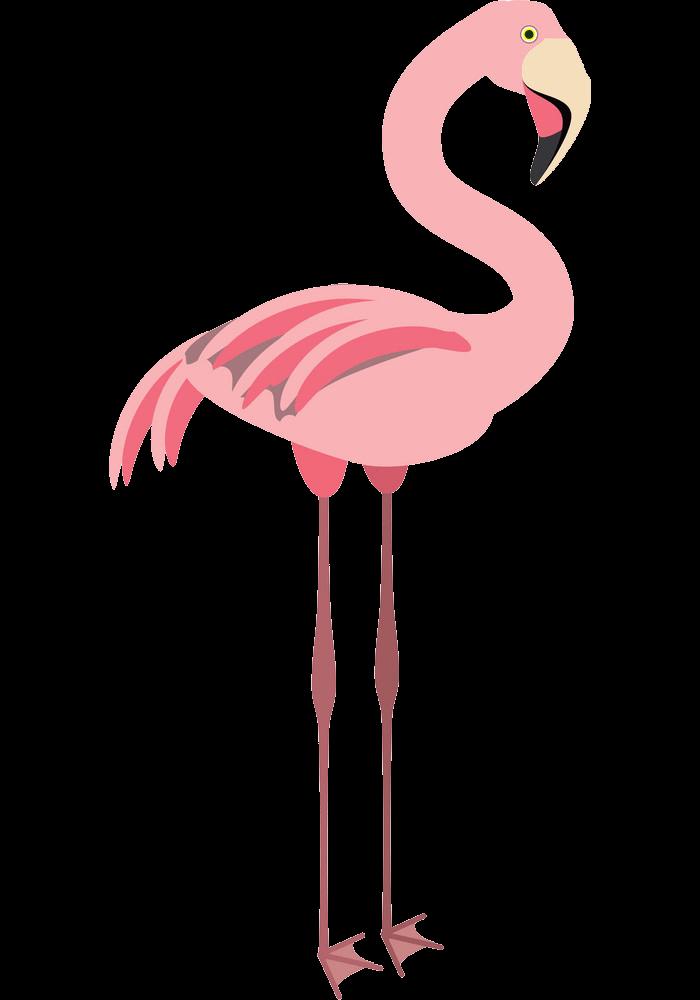 Flamingo clipart transparent 3