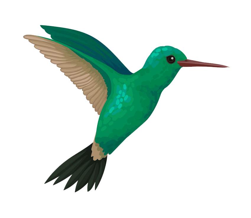 Flying Hummingbird clipart transparent