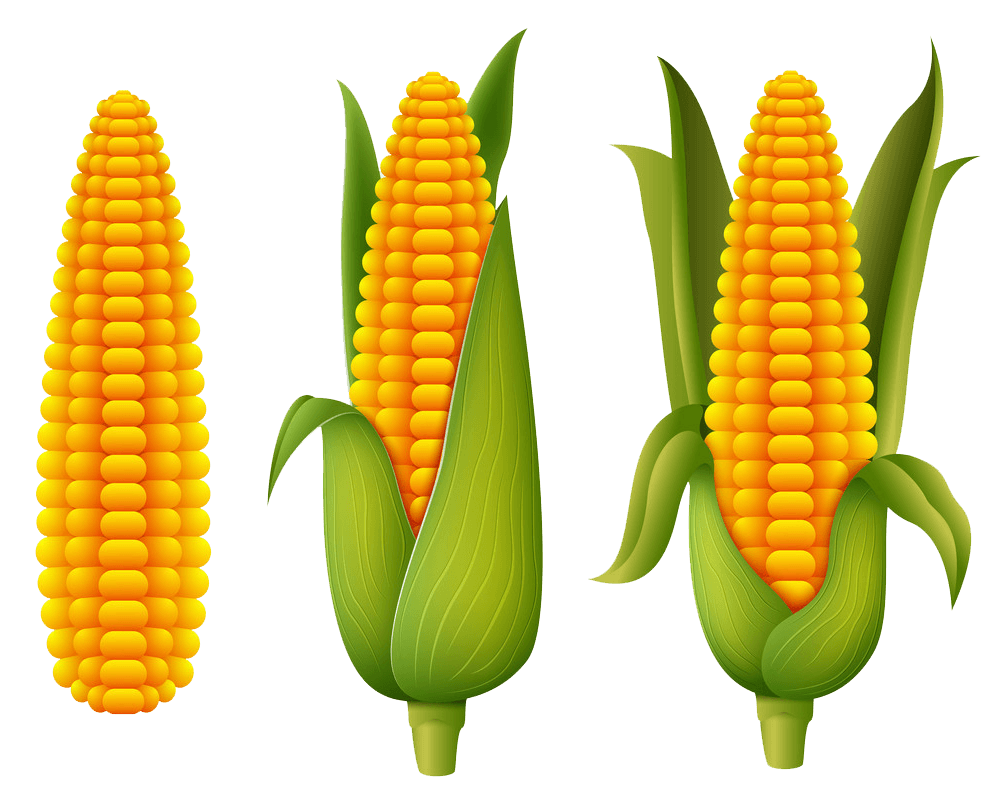 Fresh Corn clipart transparent