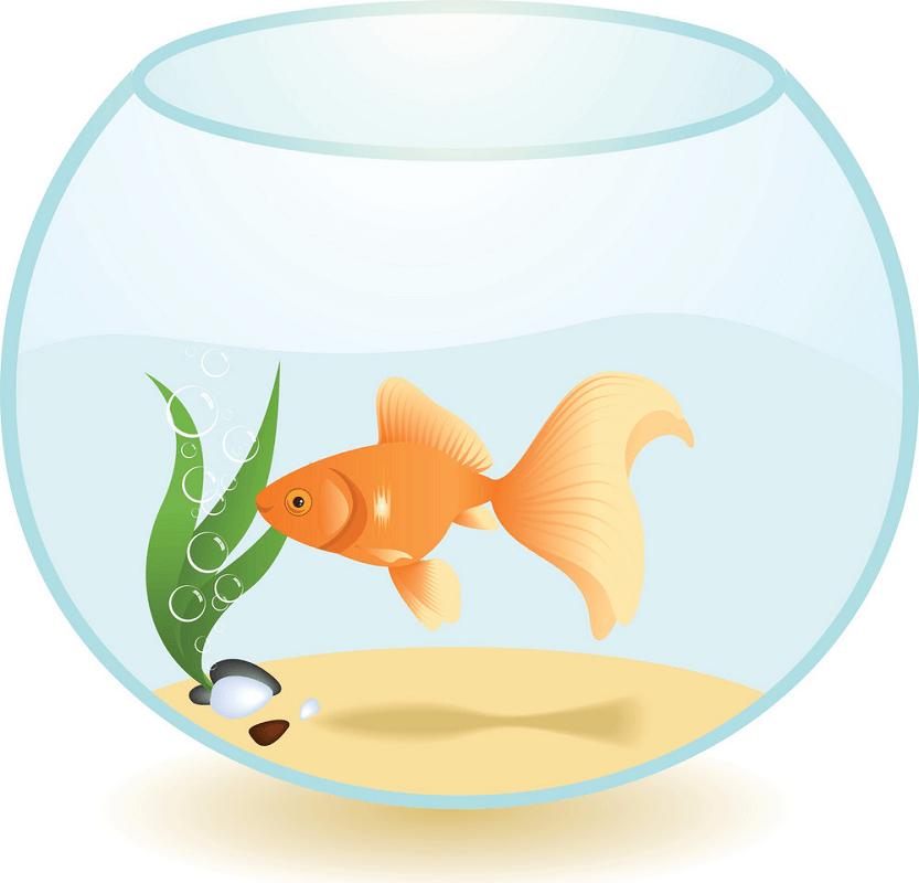 Goldfish clipart 3