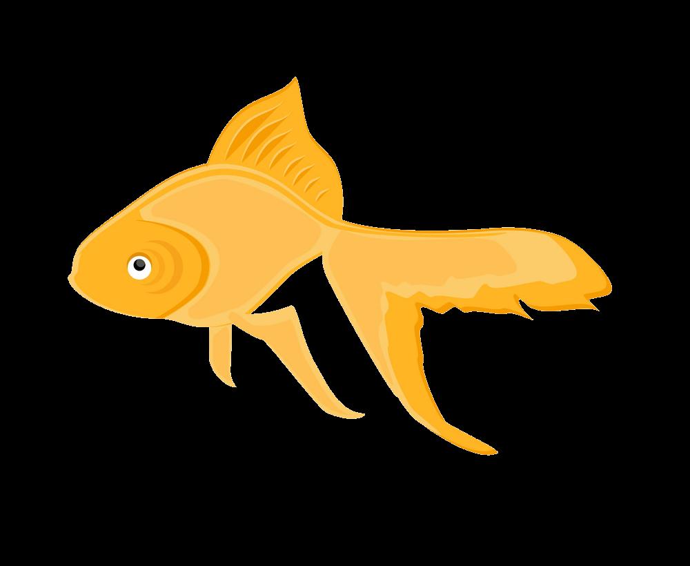 Goldfish clipart transparent 1