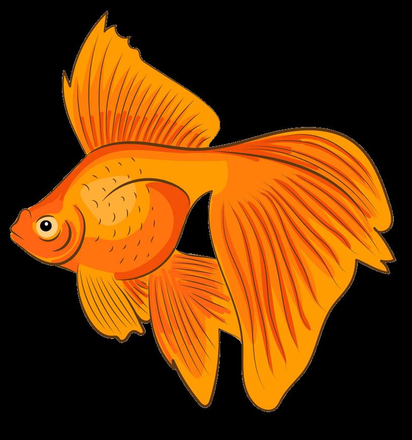 Goldfish clipart transparent