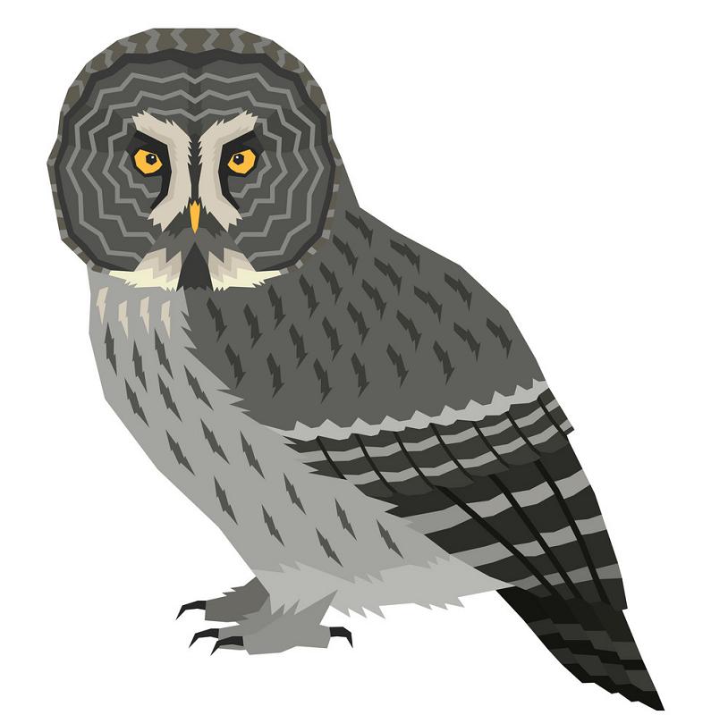 Gray Owl clipart