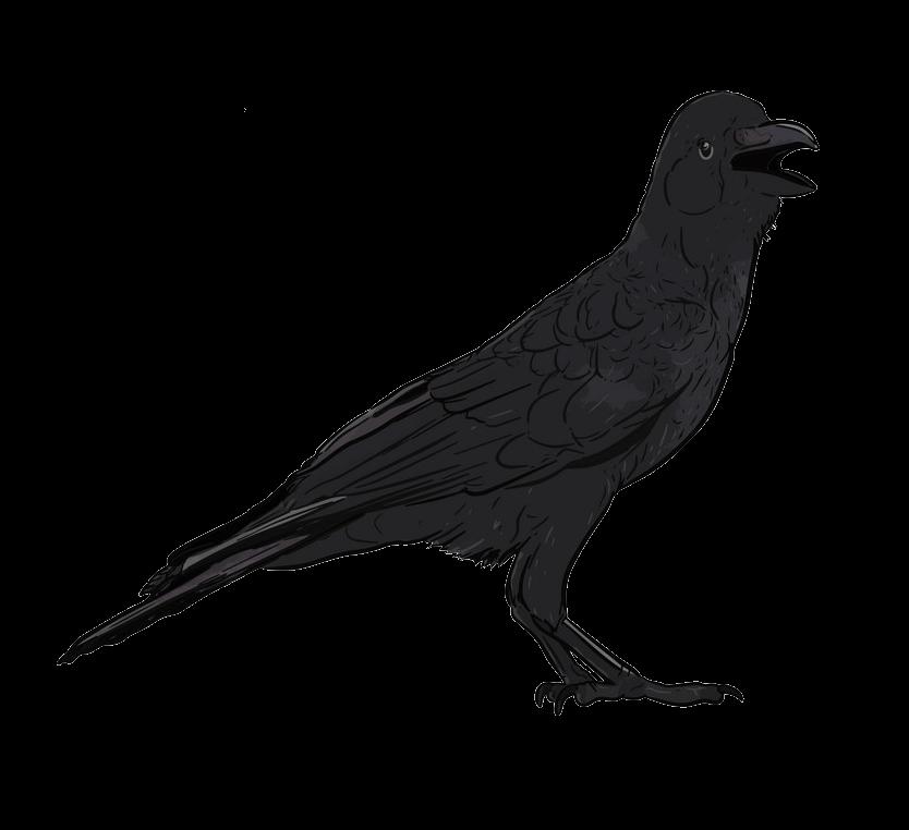 Hand Drawn Crow clipart transparent