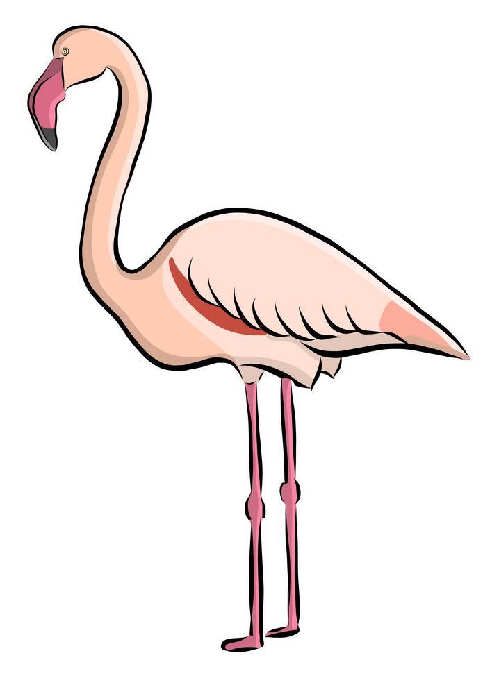 Hand Drawn Flamingo clipart
