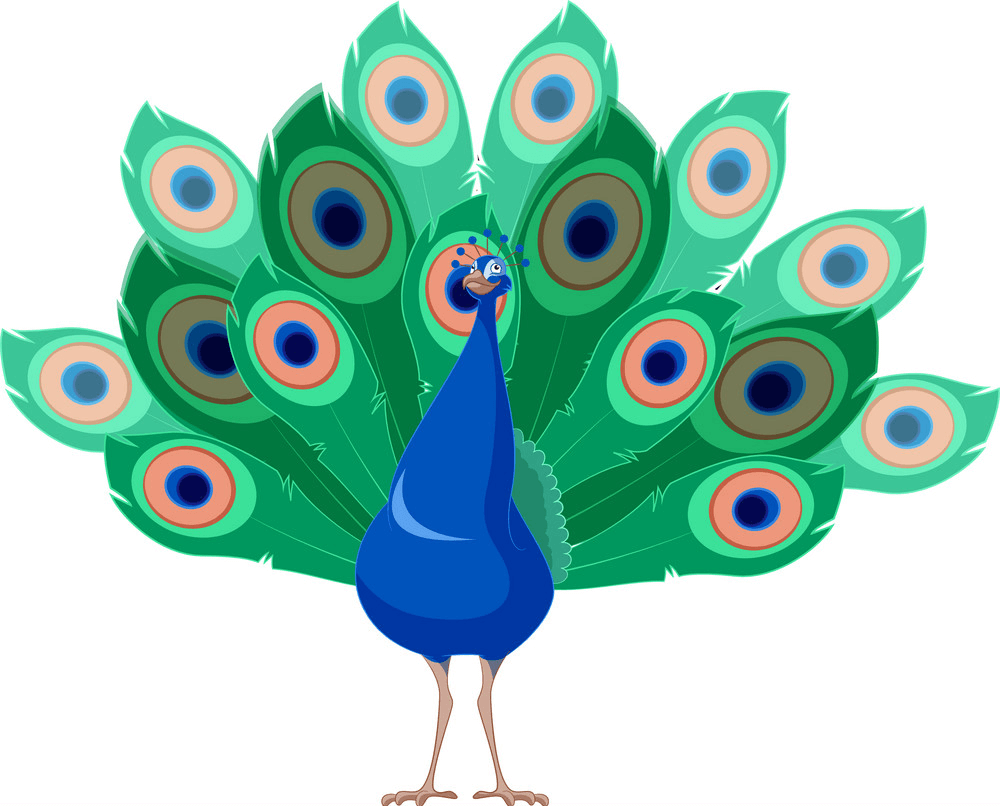 Happy Peacock clipart