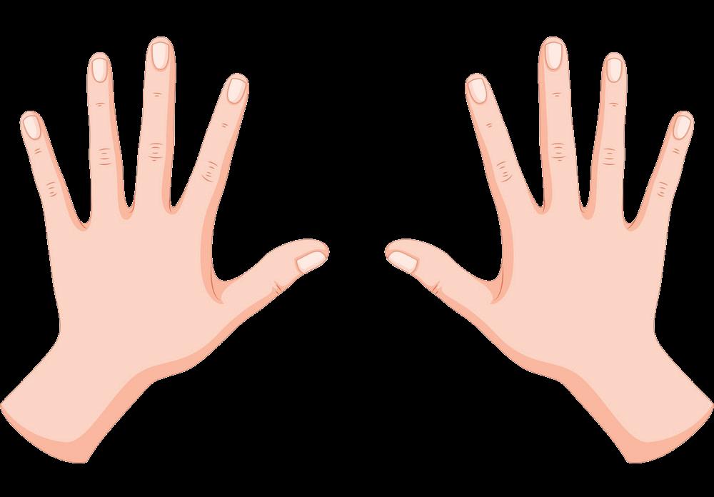 Human Hands clipart transparent