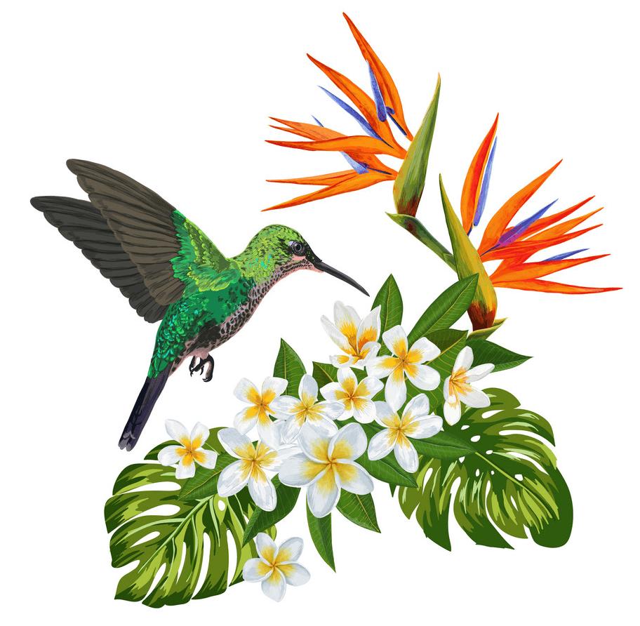 Hummingbird clipart 1