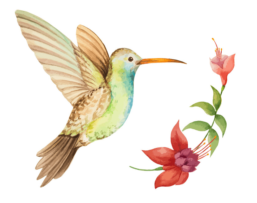Hummingbird clipart 2