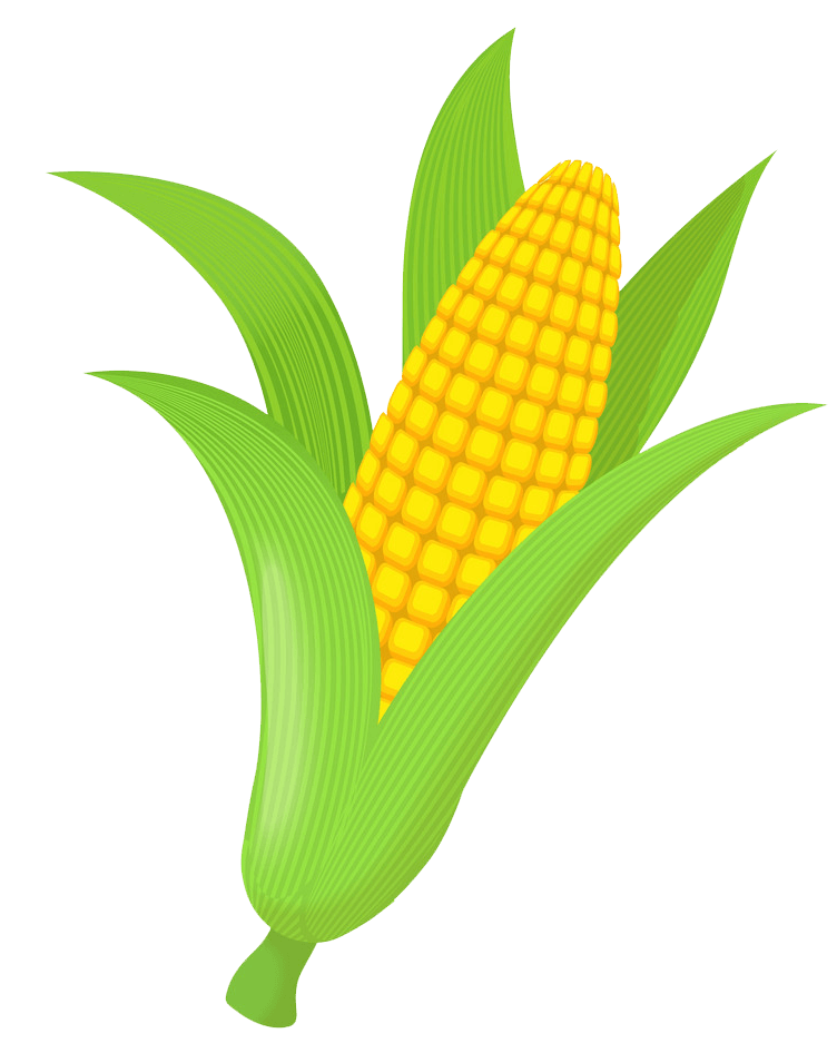 Icon Corn clipart transparent