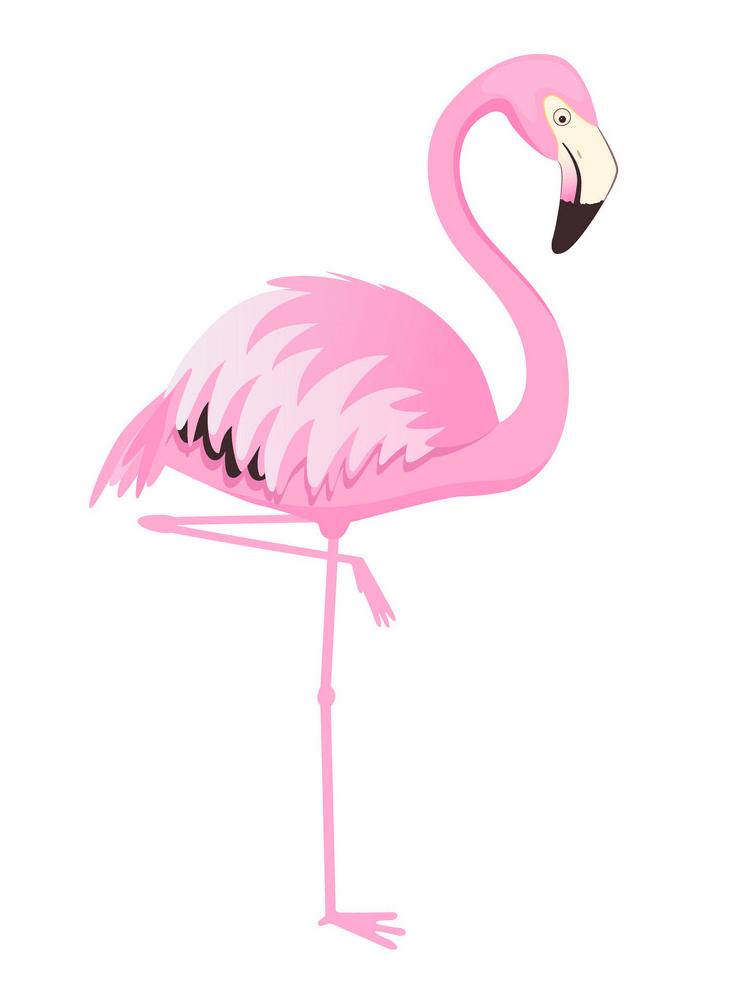Lovely Flamingo clipart