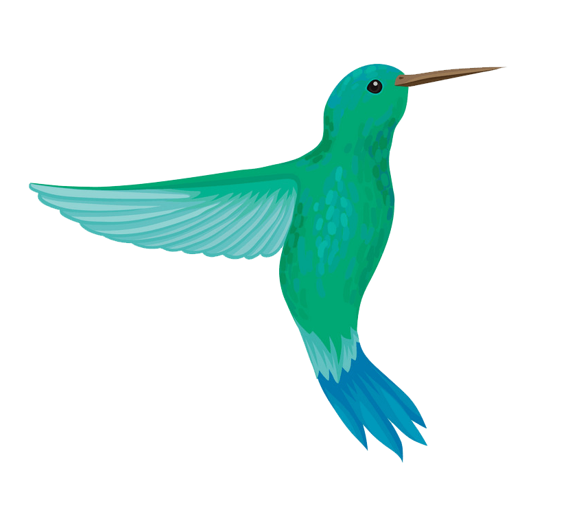 Lovely Hummingbird clipart transparent