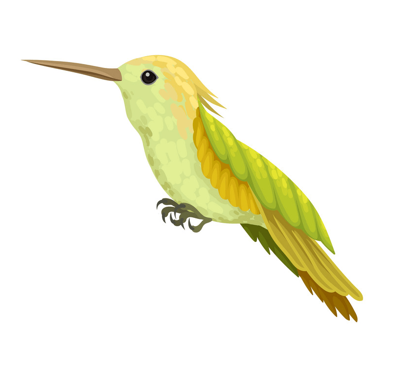 Lovely Hummingbird clipart
