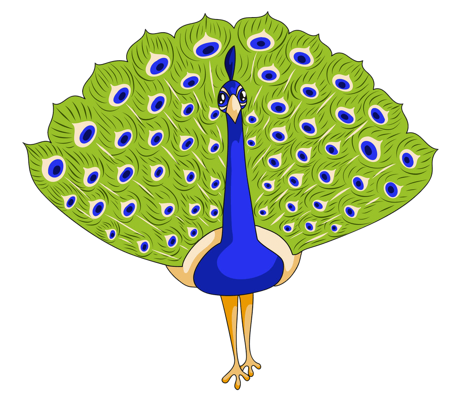 Lovely Peacock clipart transparent