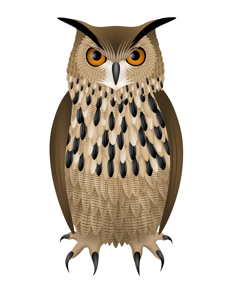 Owl clipart transparent
