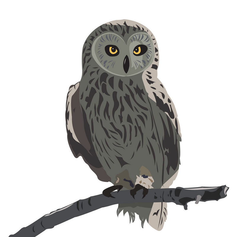 Owl on a Branch clipart