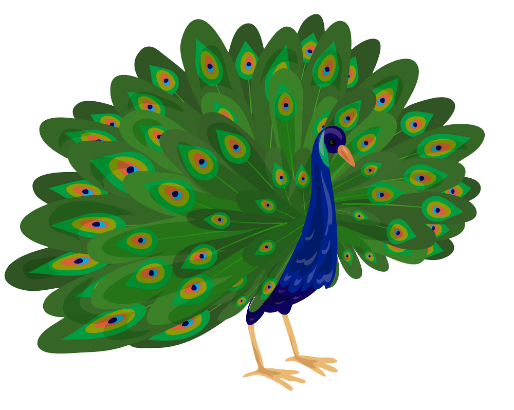 Peacock clipart transparent 1