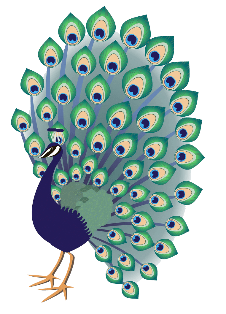 Peacock clipart transparent 3