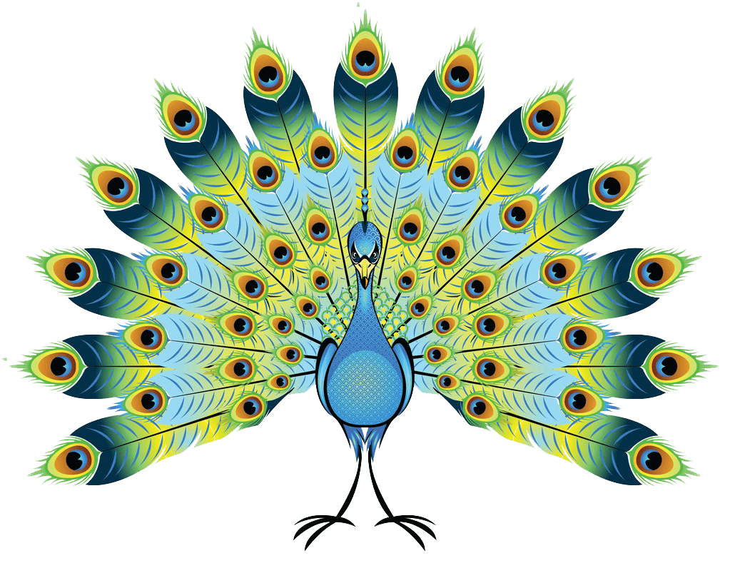 Peacock clipart transparent 4