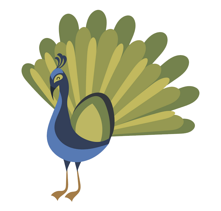 Peacock clipart transparent 5