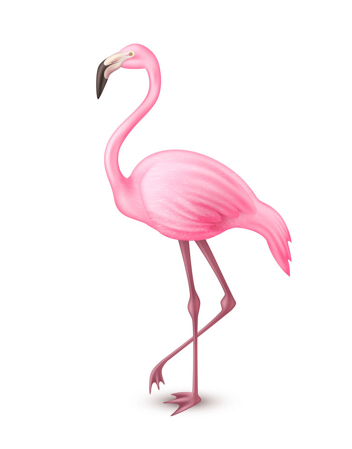Realistic Flamingo clipart