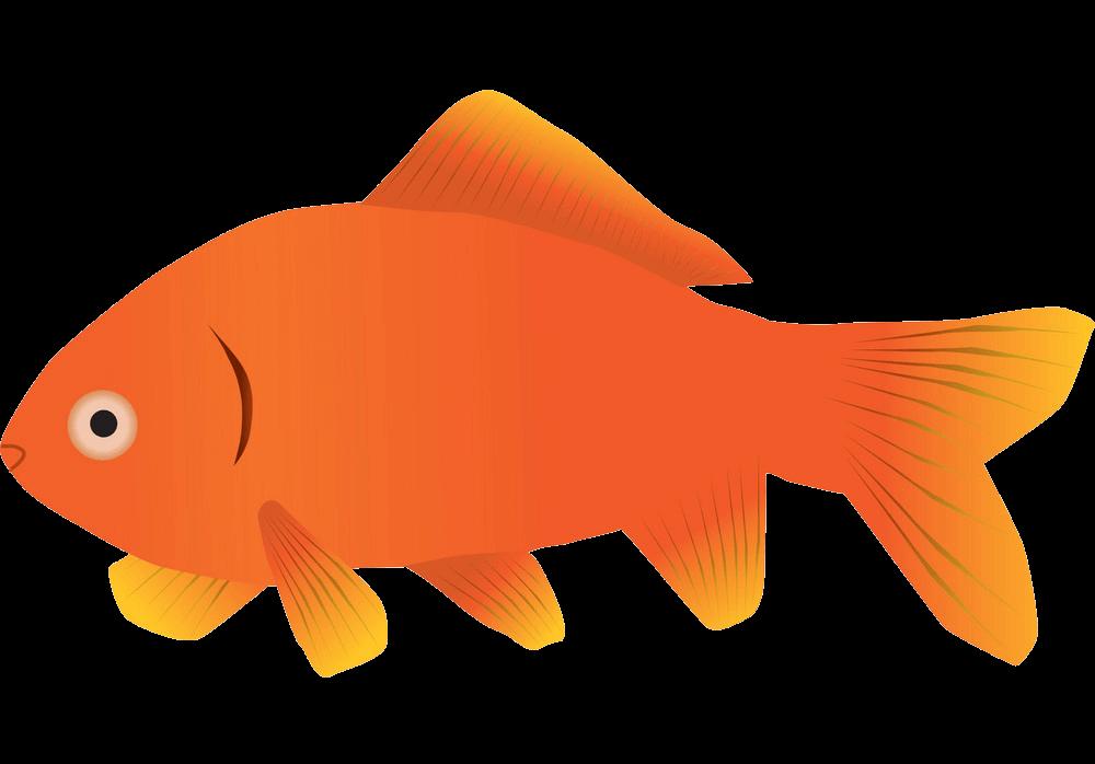 Simple Goldfish clipart transparent