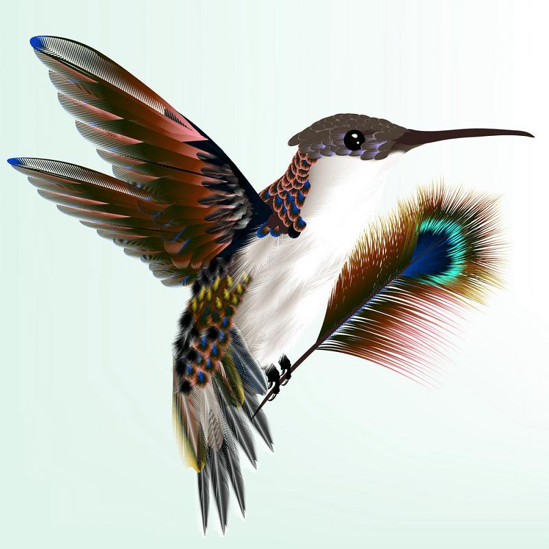 Wild Hummingbird clipart