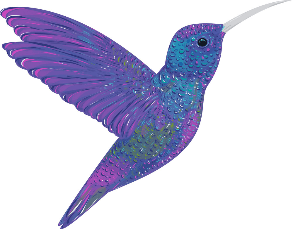 Wonderful Hummingbird clipart