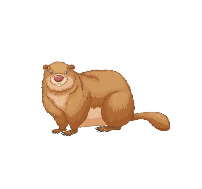 Groundhog clipart 1