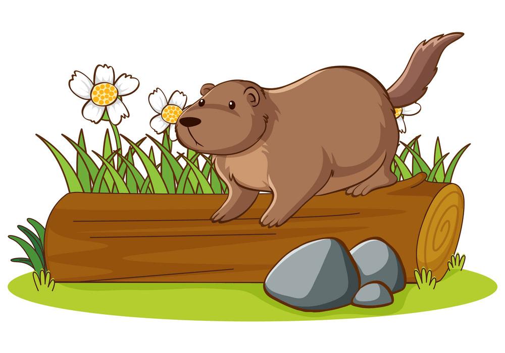Groundhog clipart 2