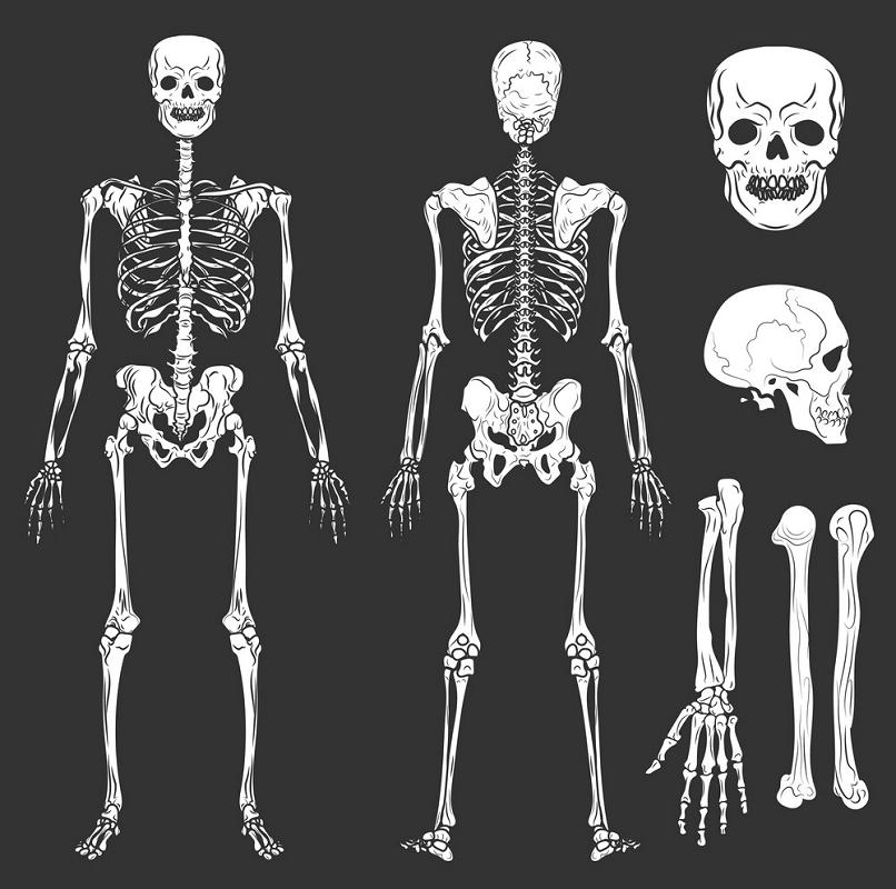 Bones and Skeleton clipart