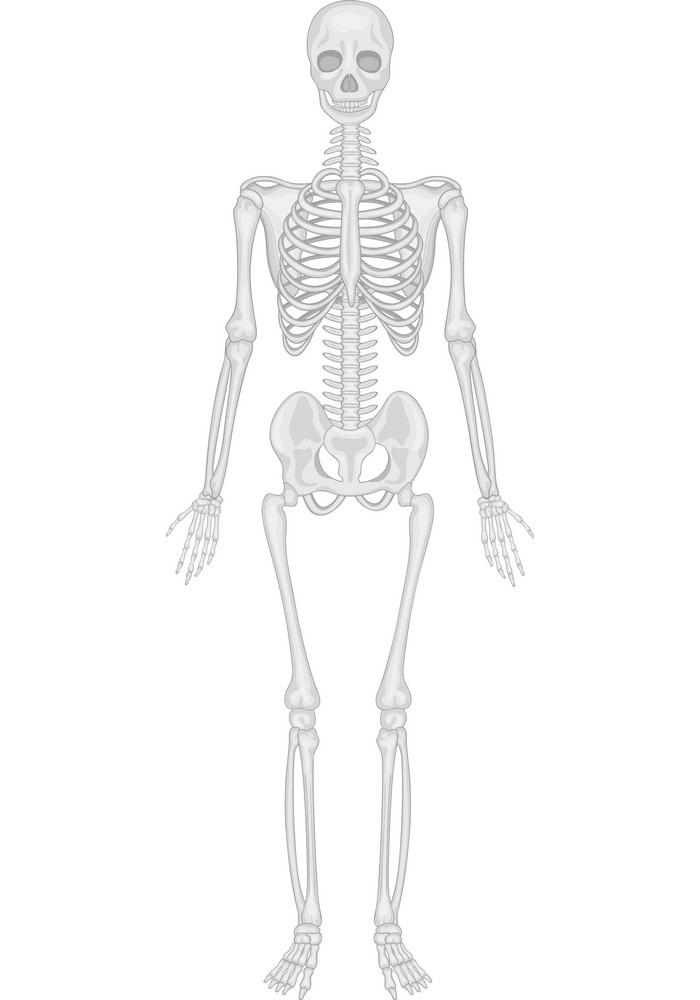 Human Skeleton clipart 1