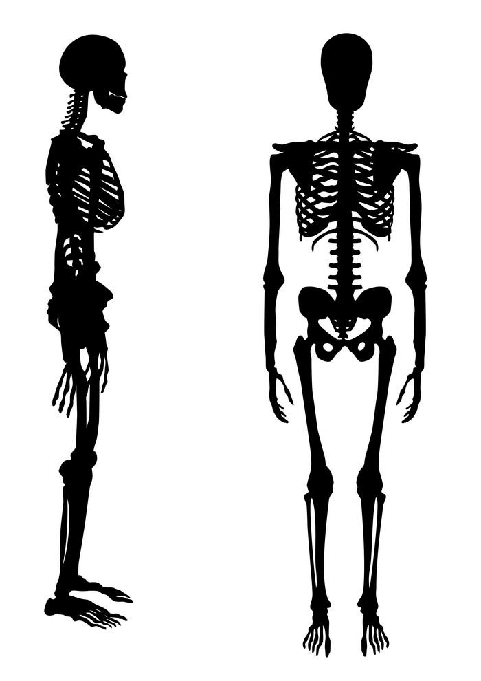 Human Skeleton clipart 2