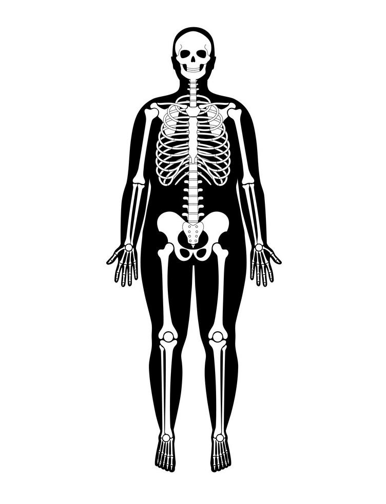 Skeleton Anatomy clipart