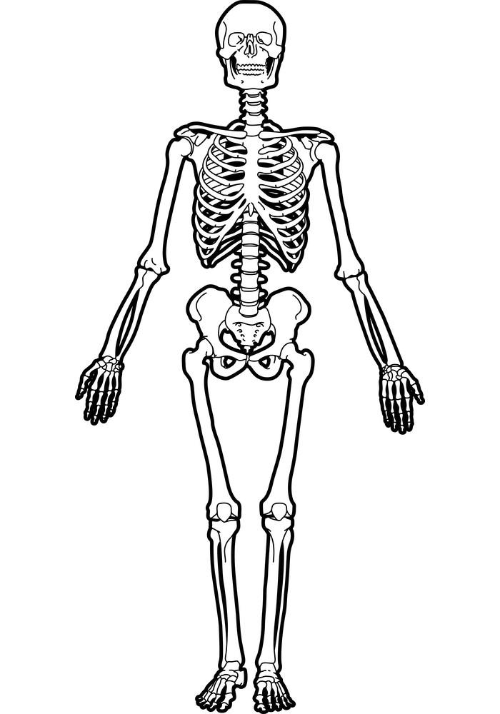 Skeleton clipart 1