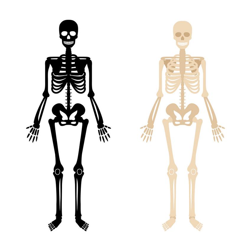 Skeleton clipart 2