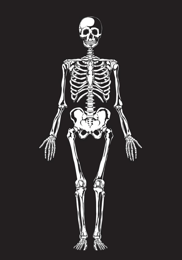 Skeleton clipart 3