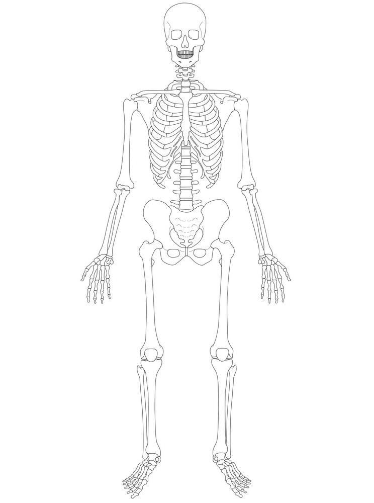 Skeleton clipart 5