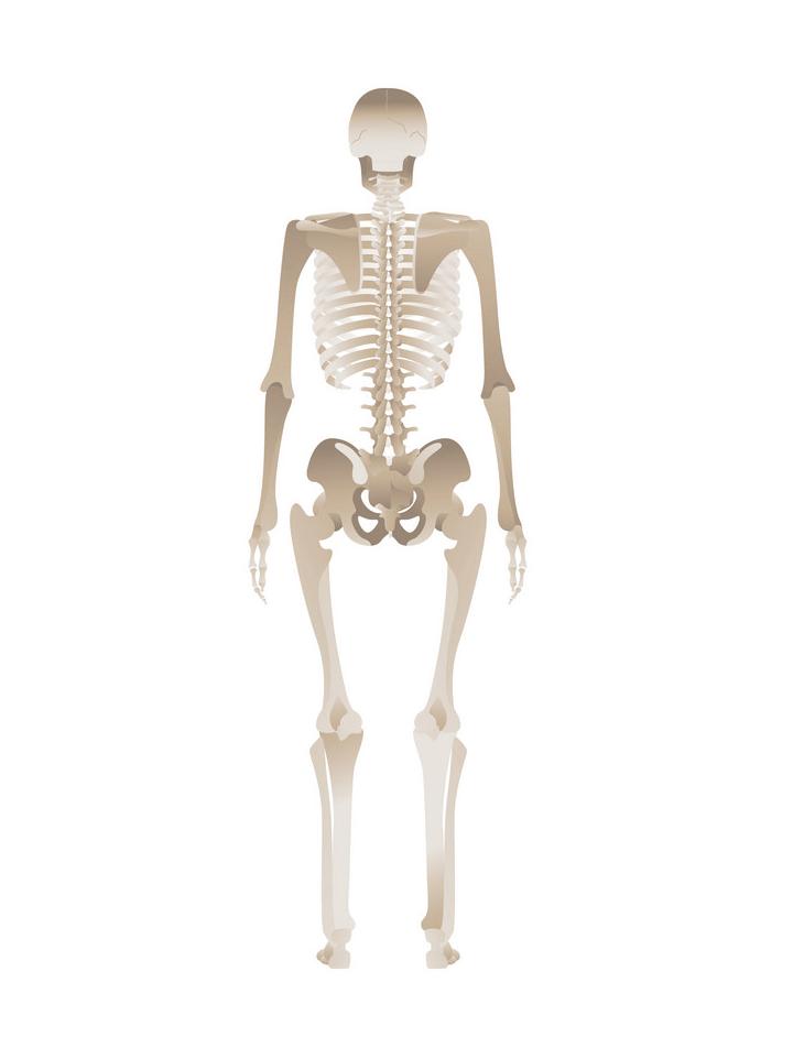 Skeleton clipart 6
