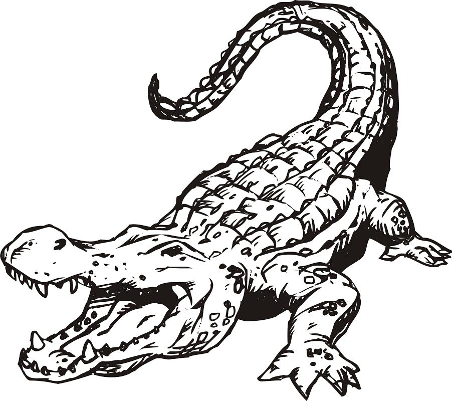 Alligator Clipart Black and White 2