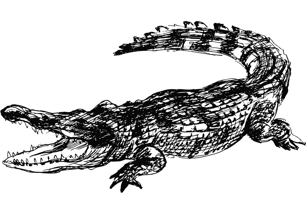 Alligator Clipart Black and White 5