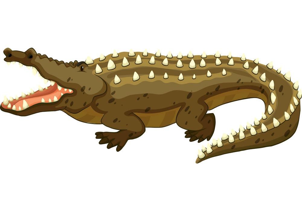 Alligator clipart 1