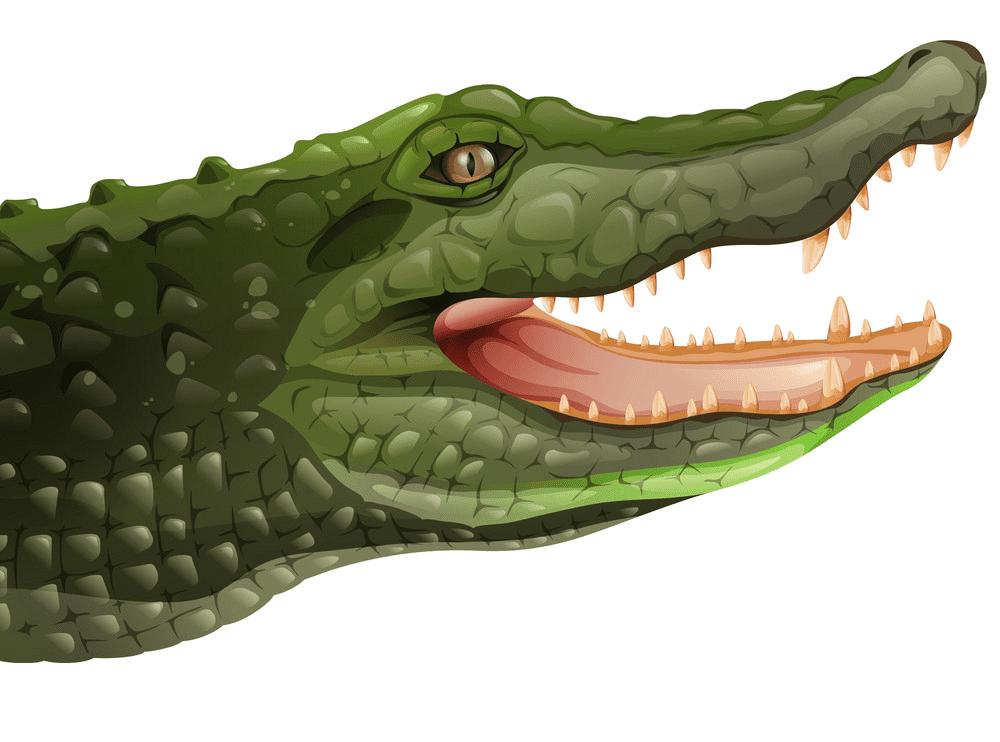 Alligator clipart 7