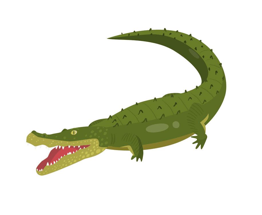 Alligator clipart 8