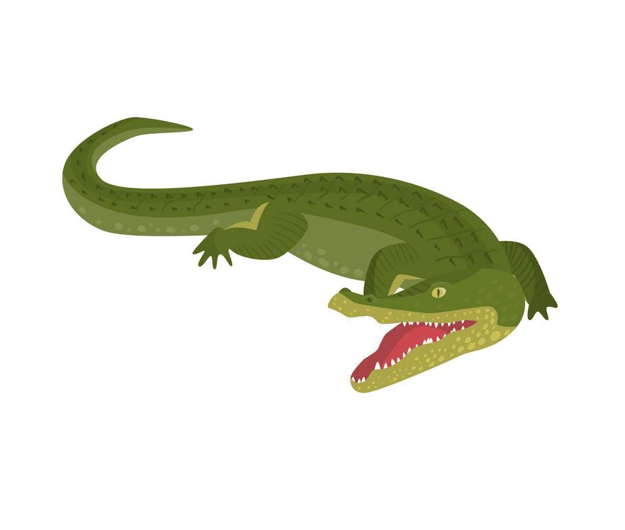 Alligator clipart png