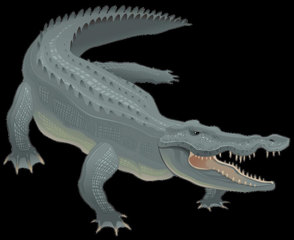 Alligator clipart transparent